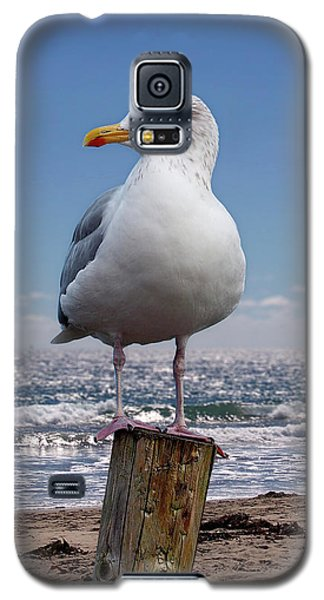 Seagull On The Shoreline Galaxy S5 Case by Phil Perkins