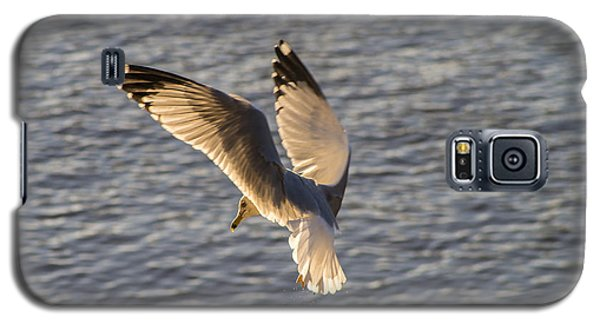 Seagull Over Cape Fear River Galaxy S5 Case