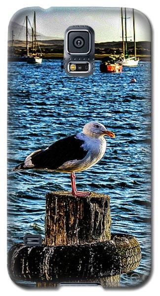 Seagull Perch Galaxy S5 Case