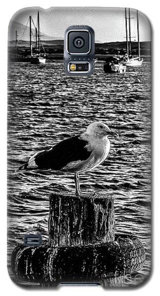 Seagull Perch, Black And White Galaxy S5 Case
