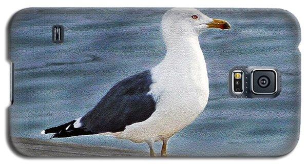 Seagull Portrait Galaxy S5 Case