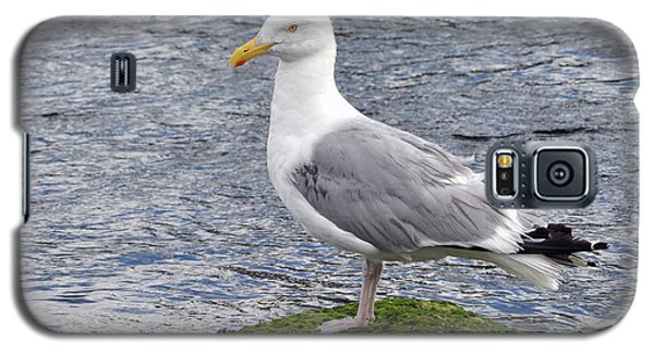 Galaxy S5 Case featuring the photograph Seagull Posing by Glenn Gordon