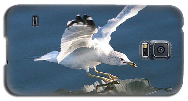 Seagull Reflection Galaxy S5 Case