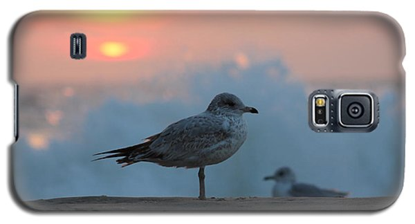 Seagull Seascape Sunrise Galaxy S5 Case