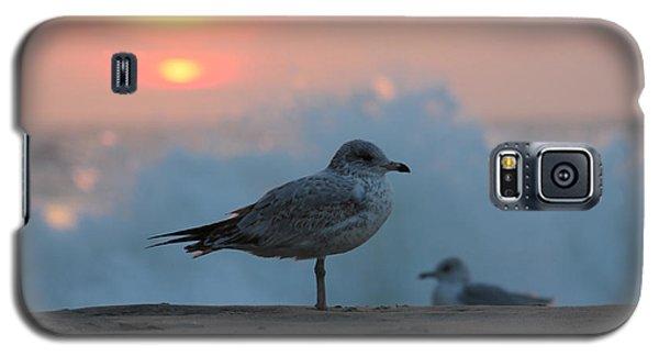 Seagull Seascape Sunrise Galaxy S5 Case by Robert Banach