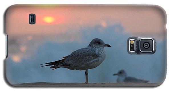 Seagull Seascape Sunrise Galaxy S5 Case