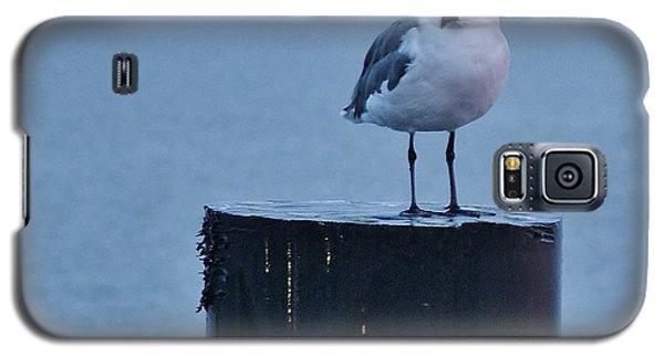 Seagull Ship Galaxy S5 Case