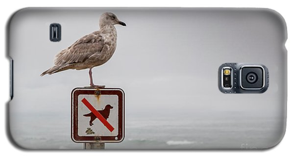 Seagull Standing On Sign And Looking At The Ocean Galaxy S5 Case