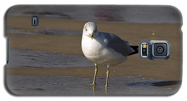 Seagull Standing Galaxy S5 Case