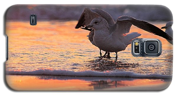Seagull Stretch At Sunrise Galaxy S5 Case