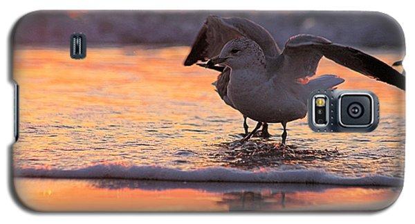 Seagull Stretch At Sunrise Galaxy S5 Case