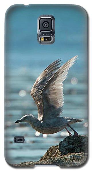 Seagull Takeoff Galaxy S5 Case