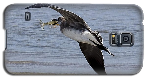 Seagull With Shrimp Galaxy S5 Case