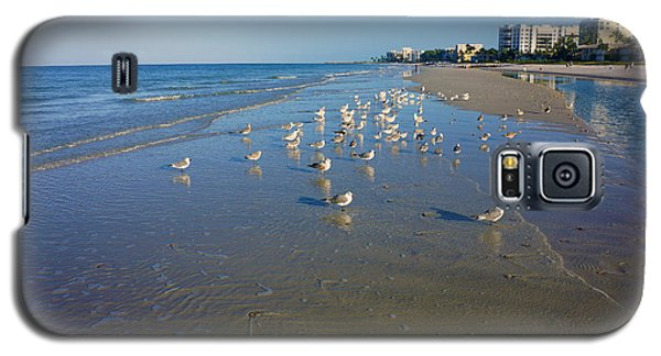 Seagulls And Terns On The Beach In Naples, Fl Galaxy S5 Case by Robb Stan