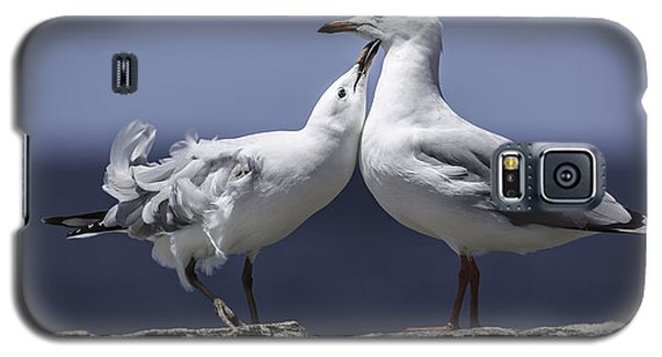 Seagulls Galaxy S5 Case
