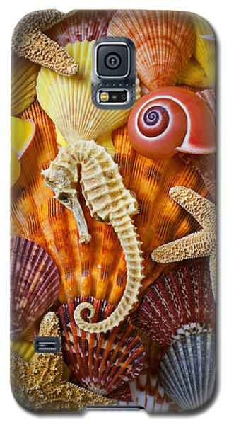 Seahorse Galaxy S5 Case - Seahorse And Assorted Sea Shells by Garry Gay