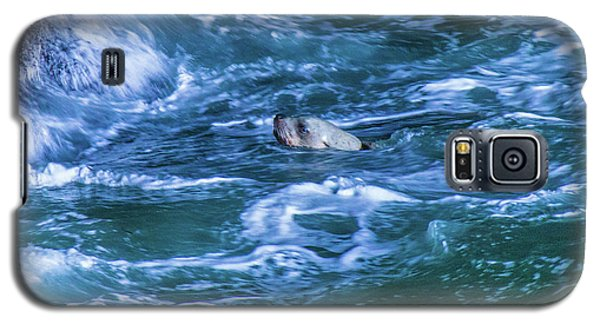 Galaxy S5 Case featuring the photograph Seal In Teh Water by Jonny D