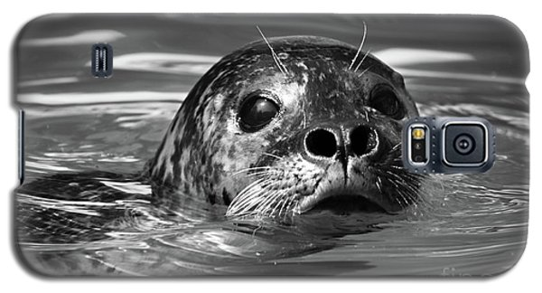 Seal In Water Galaxy S5 Case