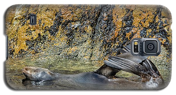 Seal On His Back Galaxy S5 Case by Patricia Hofmeester