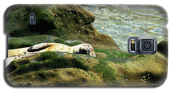 Galaxy S5 Case featuring the photograph Seal On The Rocks by Anthony Jones