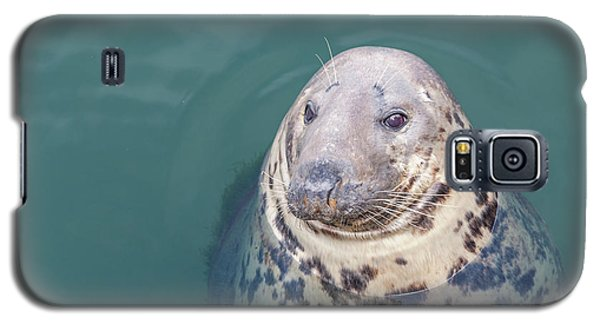 Seal With Long Whiskers With Head Sticking Out Of Water Galaxy S5 Case