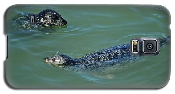 Sealion Friends Galaxy S5 Case