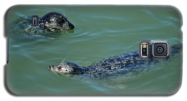 Sealion Friends Galaxy S5 Case