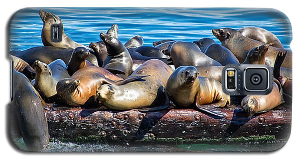 Sealions On A Floating Dock Another View Galaxy S5 Case