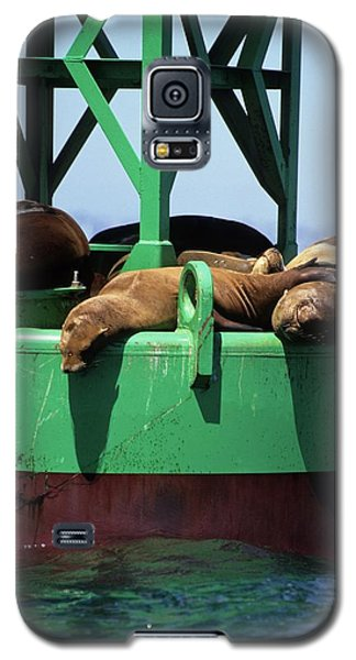 Seals On Channel Marker Galaxy S5 Case
