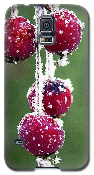 Seasonal Colors Galaxy S5 Case