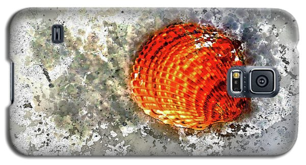 Seashell Art  Galaxy S5 Case by HH Photography of Florida
