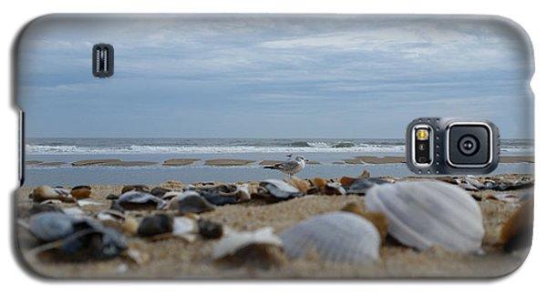 Seashells Seagull Seashore Galaxy S5 Case