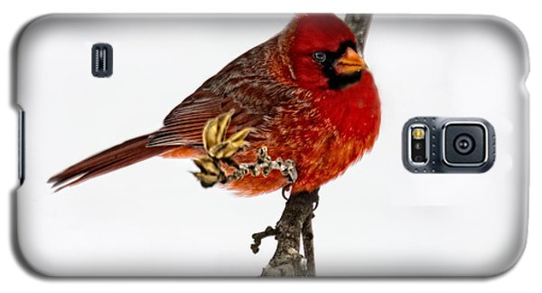 Galaxy S5 Case featuring the photograph Second Cardinal by Skip Tribby