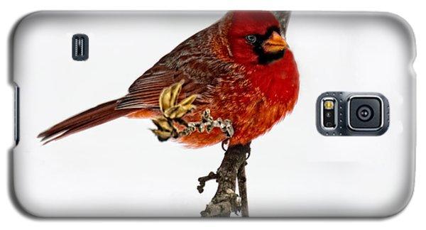 Second Cardinal Galaxy S5 Case