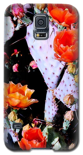 Second Day Color Galaxy S5 Case