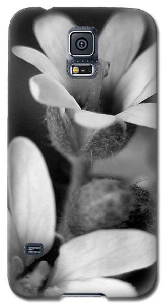 Second Look Galaxy S5 Case