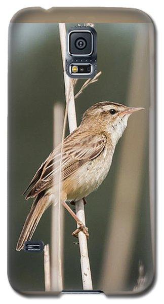 Sedge In The Sedge Galaxy S5 Case