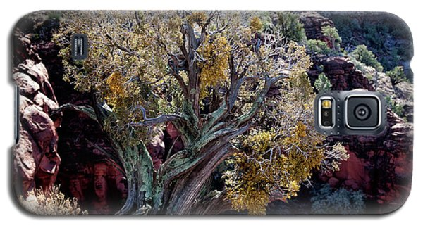 Sedona Tree #2 Galaxy S5 Case