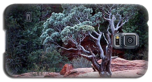 Sedona Tree #3 Galaxy S5 Case