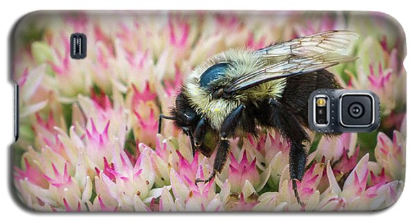 Galaxy S5 Case featuring the photograph Sedum Bumbler by Bill Pevlor