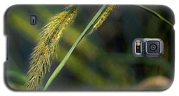 Galaxy S5 Case featuring the photograph Seeds by Allen Biedrzycki