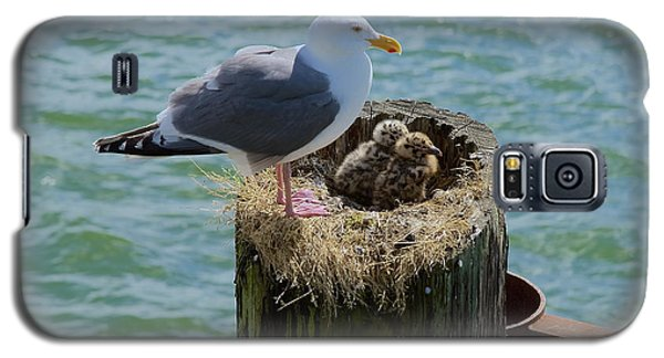 Seagull Family Galaxy S5 Case by Richard J Cassato
