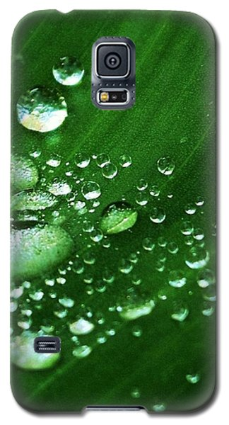 Growing Carefully Galaxy S5 Case by John Glass