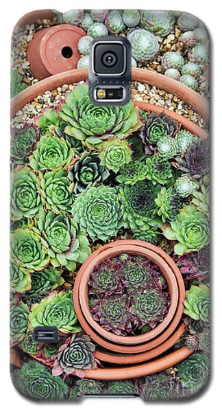 Galaxy S5 Case featuring the photograph Sempervivum Pattern by Tim Gainey