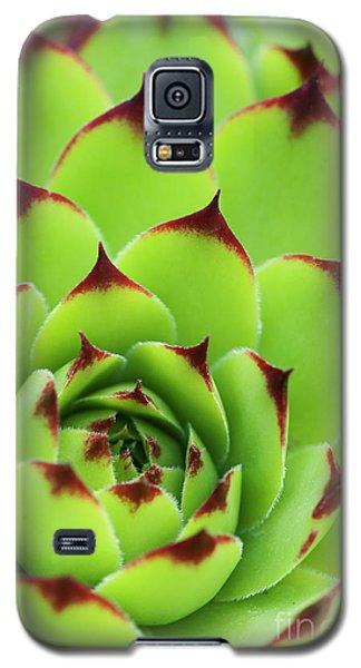 Galaxy S5 Case featuring the photograph Sempervivum Tectorum Royanum by Tim Gainey