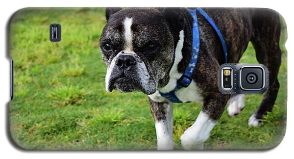 Leroy The Senior Bulldog Galaxy S5 Case