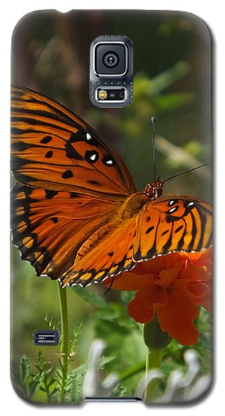 September Gulf Fritillary On Marigold Galaxy S5 Case