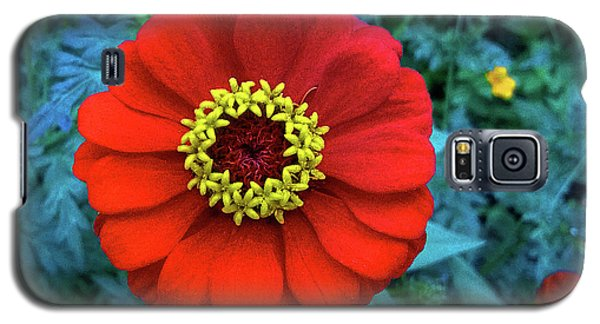 September Red Beauty Galaxy S5 Case