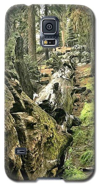Sequoia Fallen Tree Galaxy S5 Case