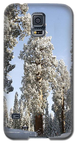 Sequoia National Park 4 Galaxy S5 Case